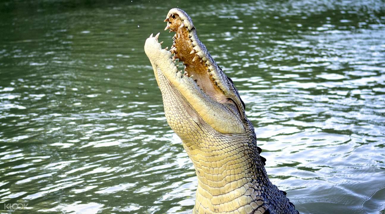 阿德莱德河探索鳄鱼之旅