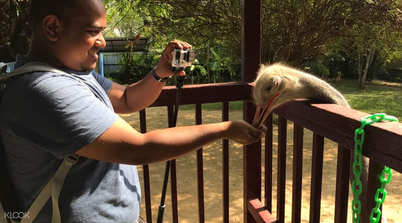 ostrich in langkawi wildlife park