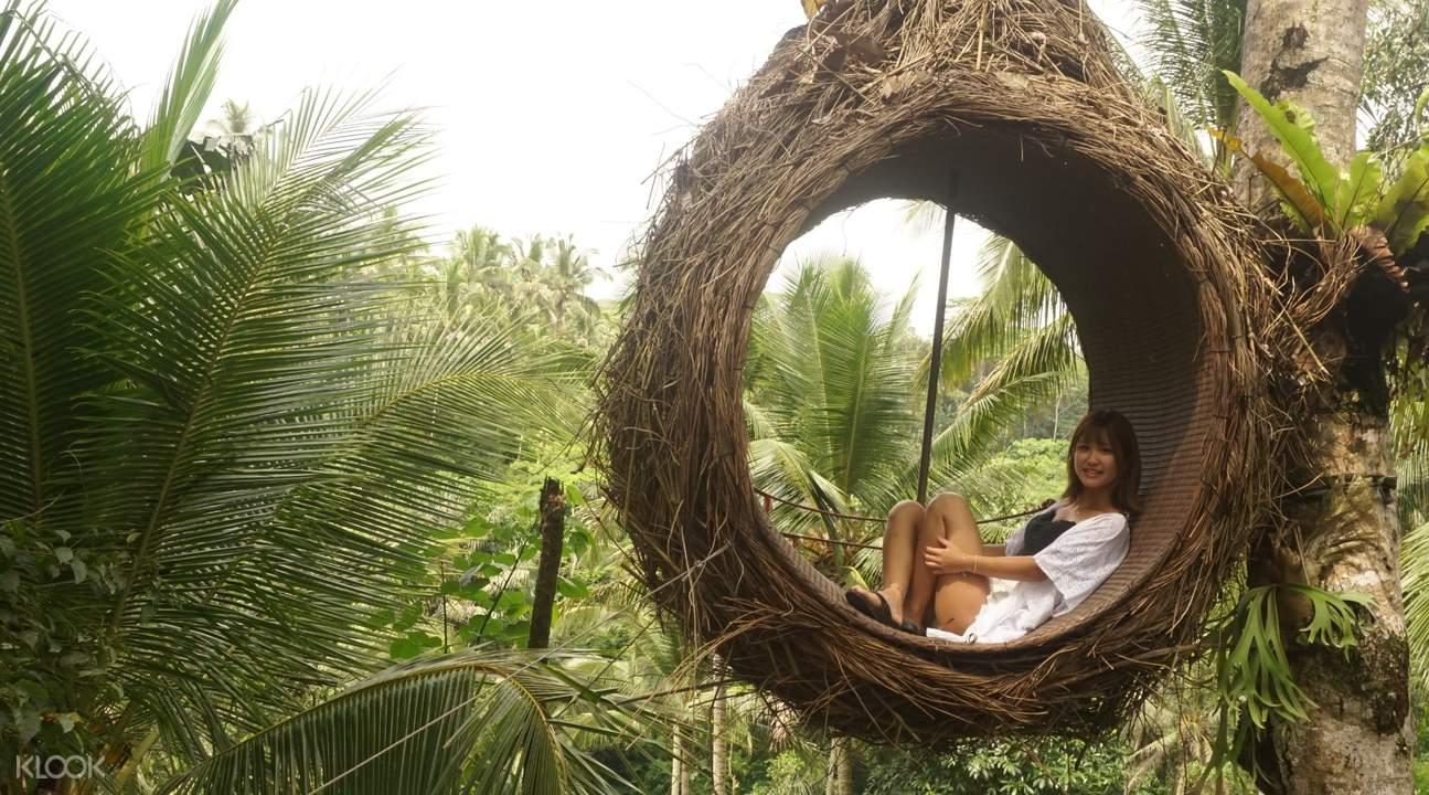 bird nest in bali