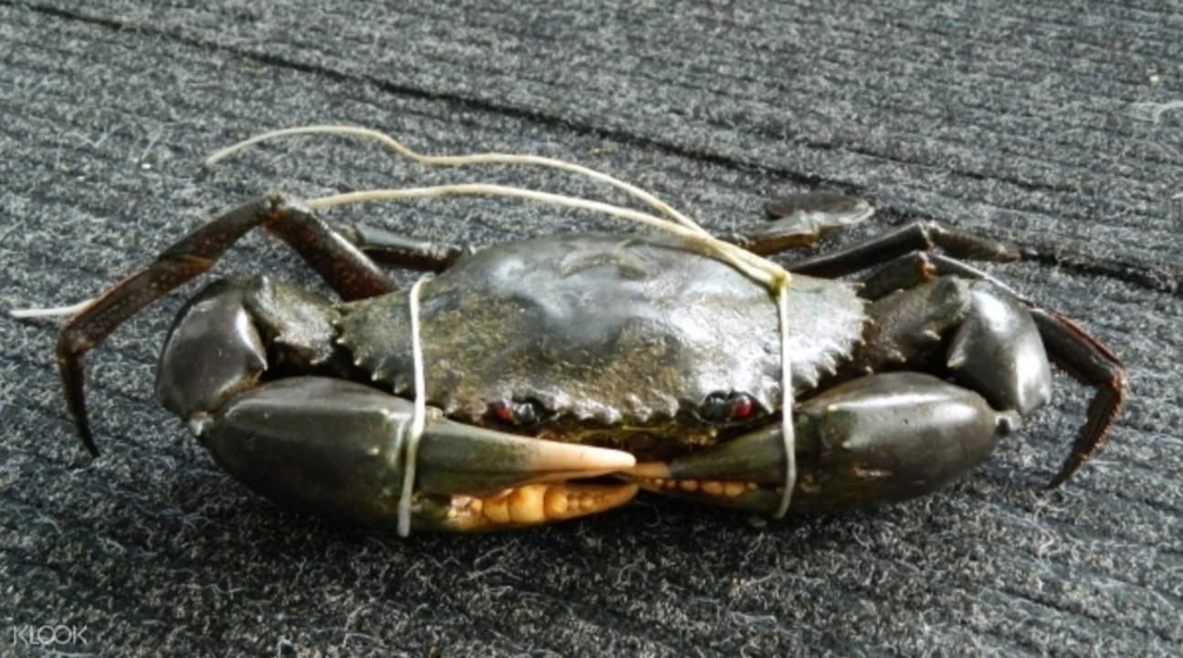 Crabbing in Cairns