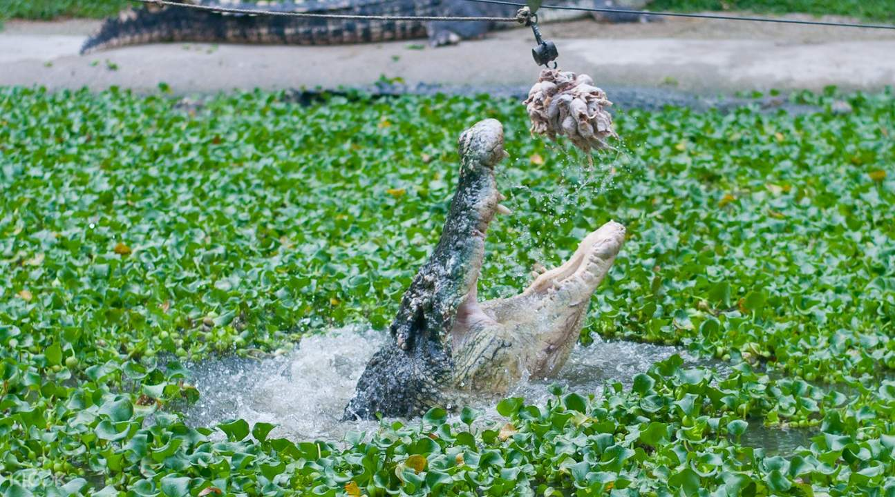 蘭卡威鱷魚公園