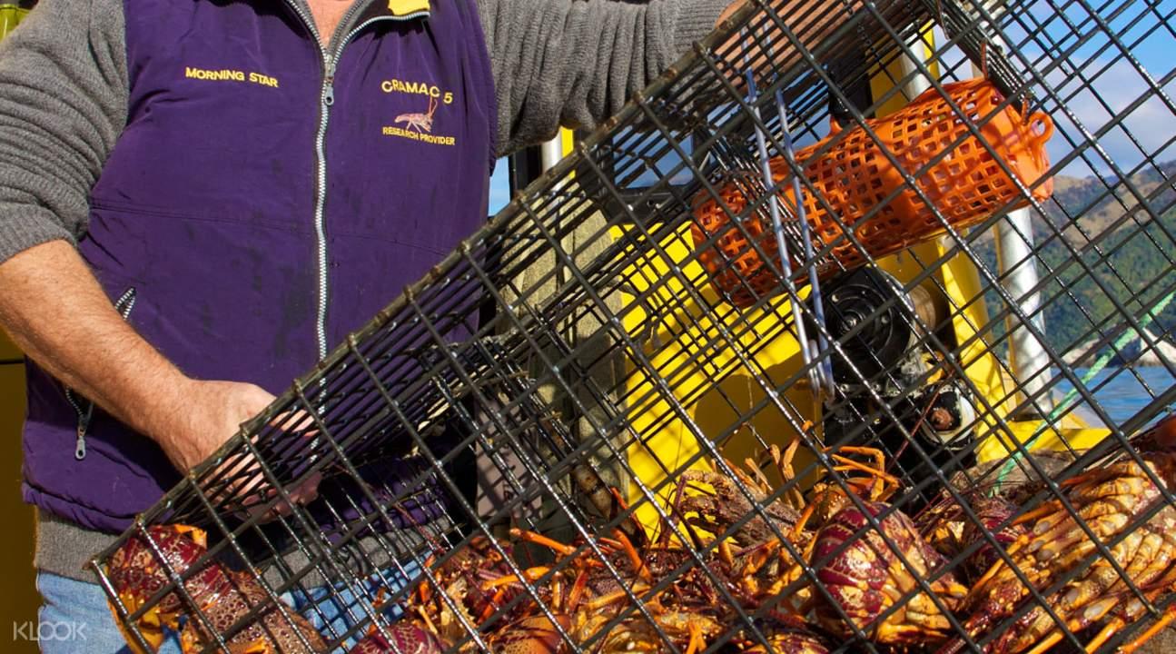 Kaikoura Crayfish Pod
