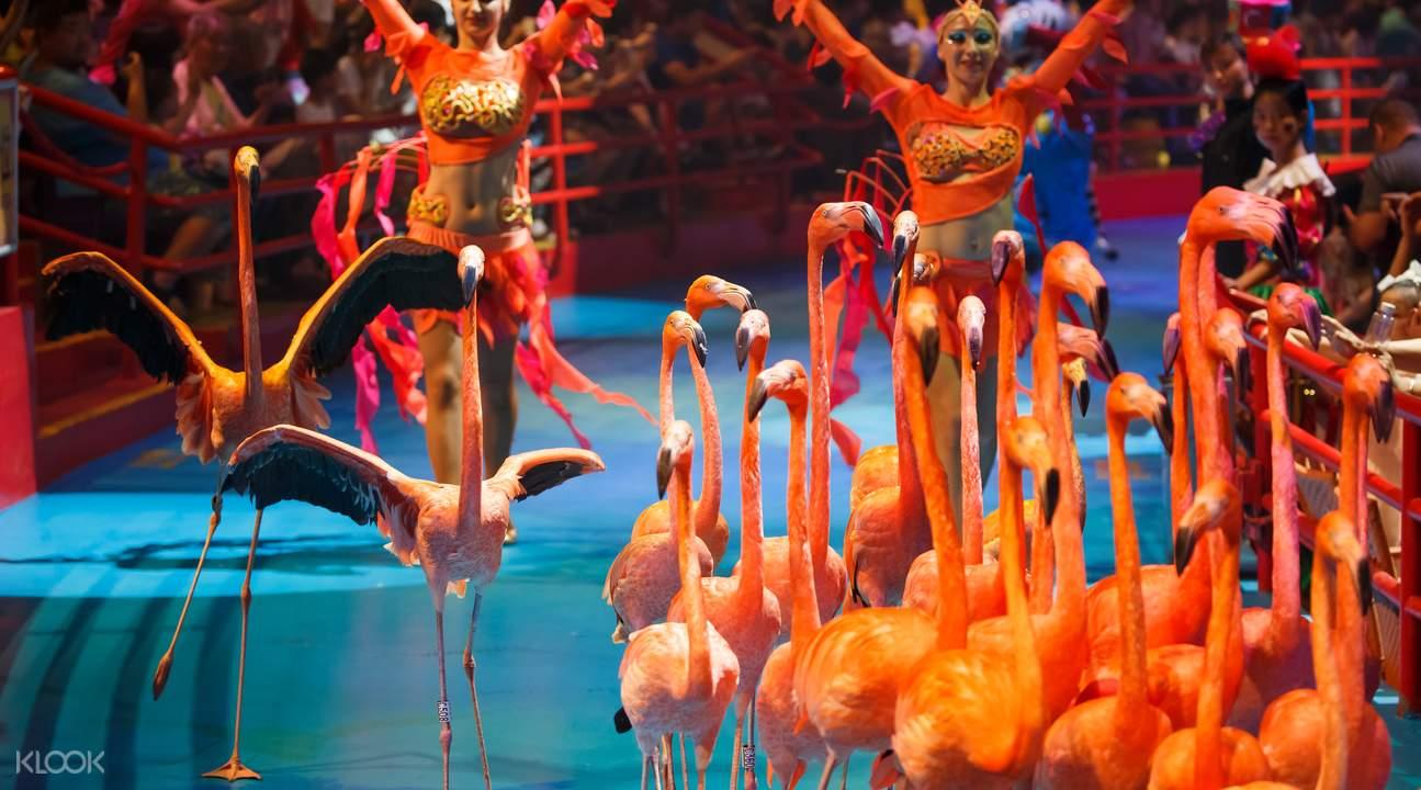 flamingos chimelong circus