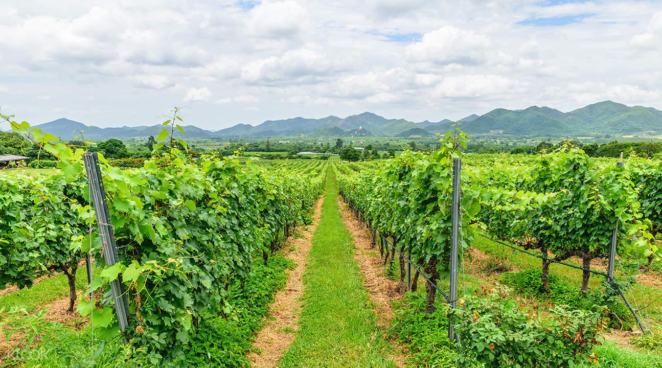 pa la u waterfall and monsoon valley vineyards tour,