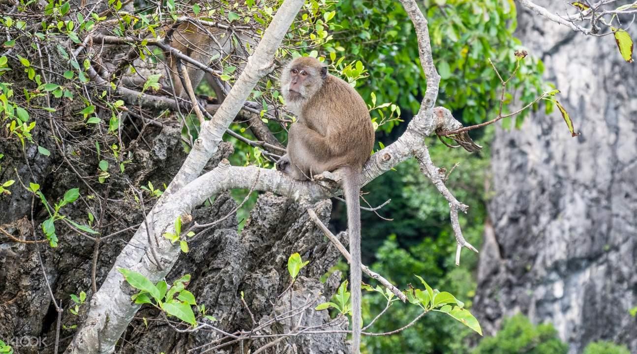 monkey at monkey beach