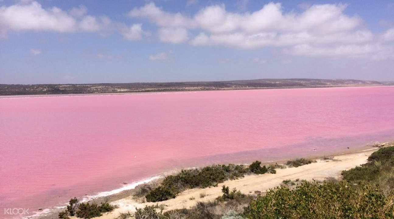西澳粉紅湖
