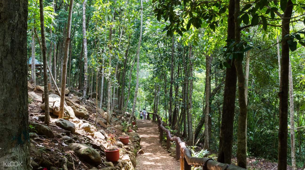 Puerto Princesa nature