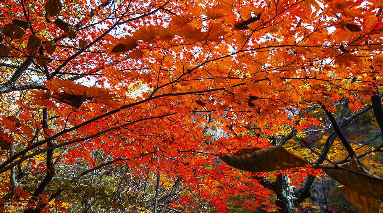 韩国赏枫景点