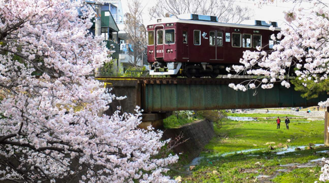 Hankyu train passing by cherry blossoms