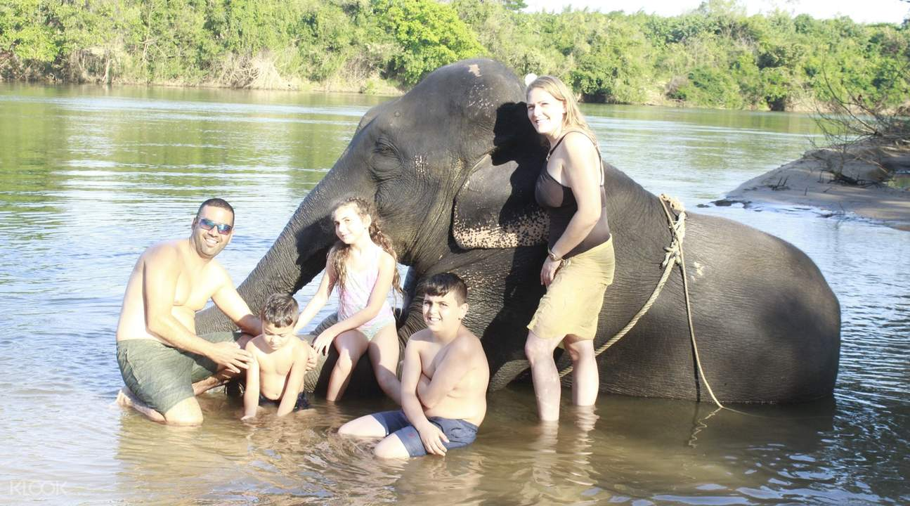 foreigners posing with the elephants in the background