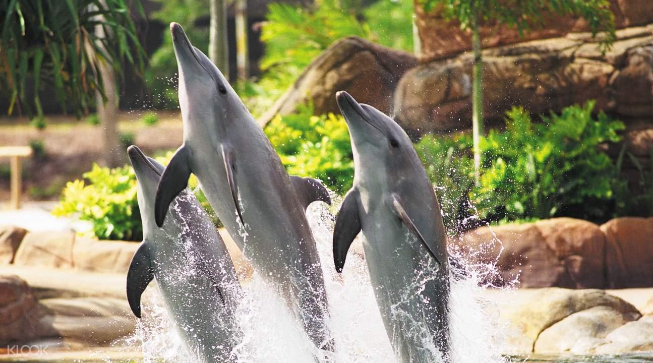 海洋世界海豚表演