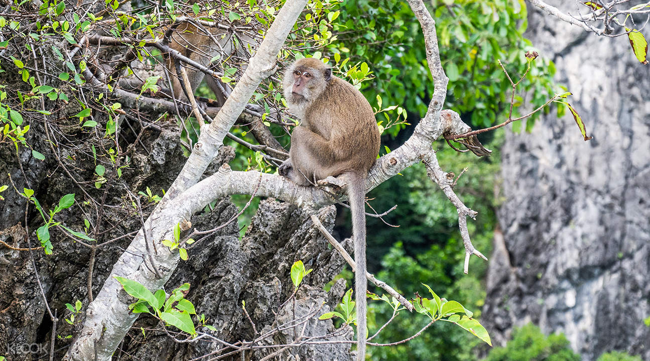 Krabi to Phi Phi Island Day Tour By Speedboat - Klook