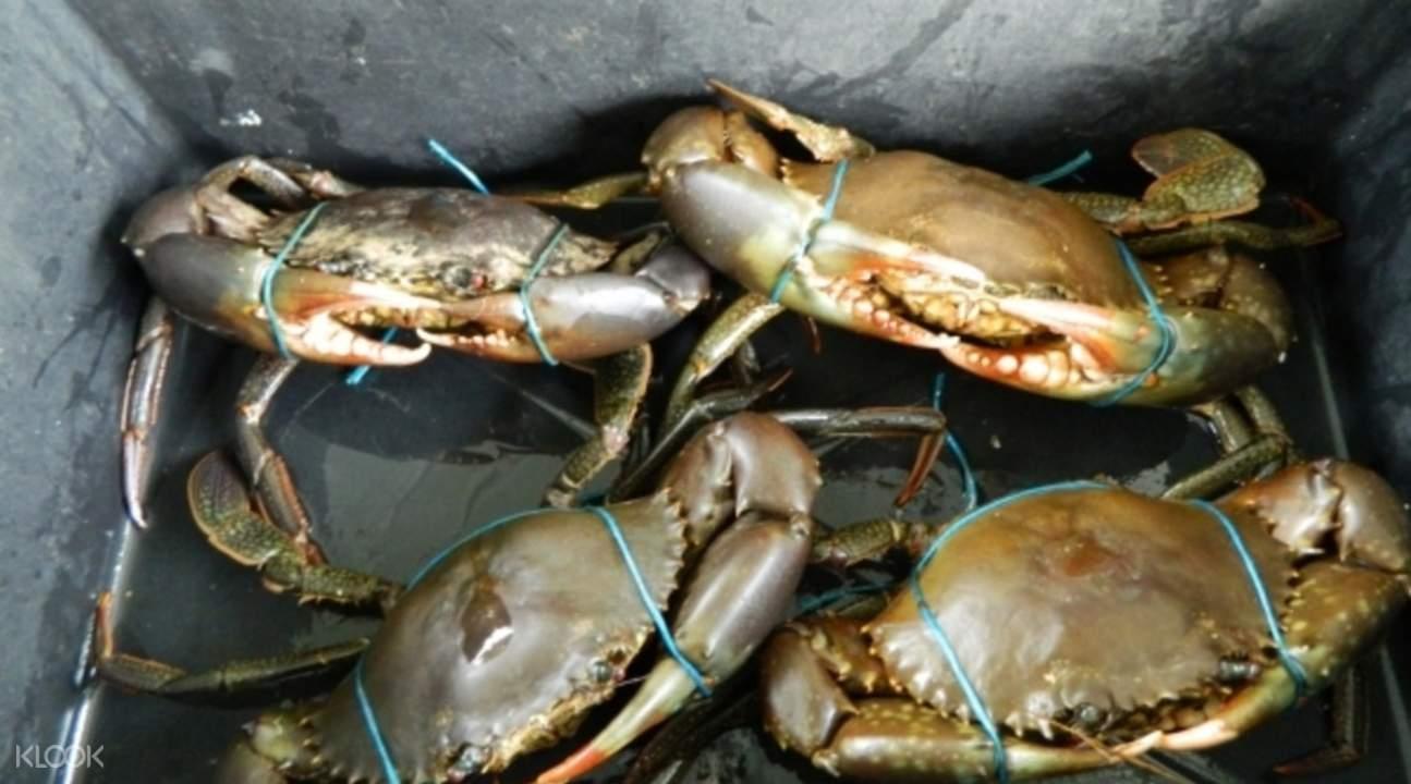 Australia crabbing tours