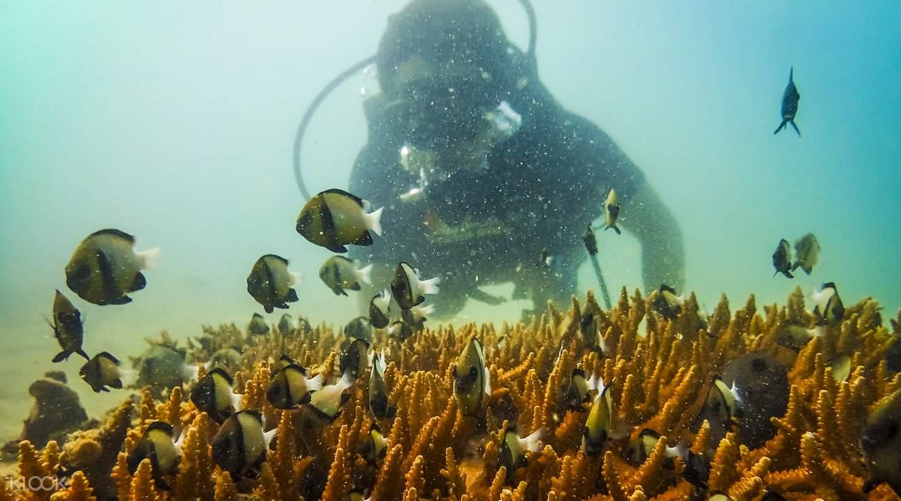 香蕉海滩潜水