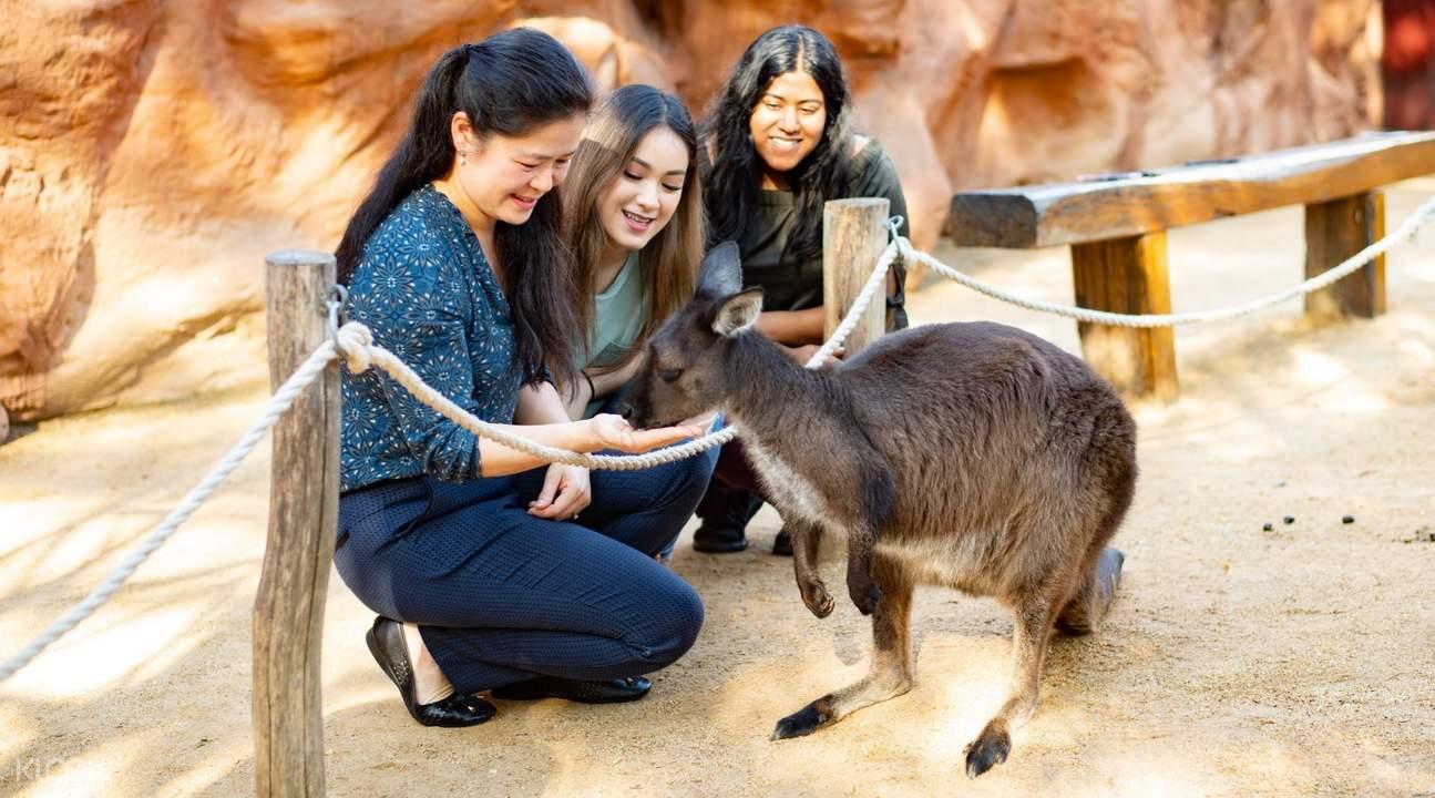 wild life sydney zoo kangaroo