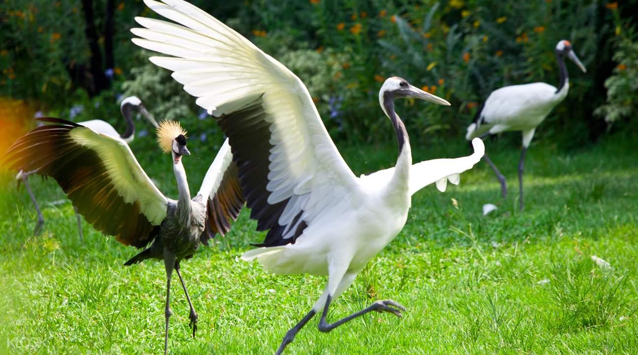 rare birds in chimelong bird park