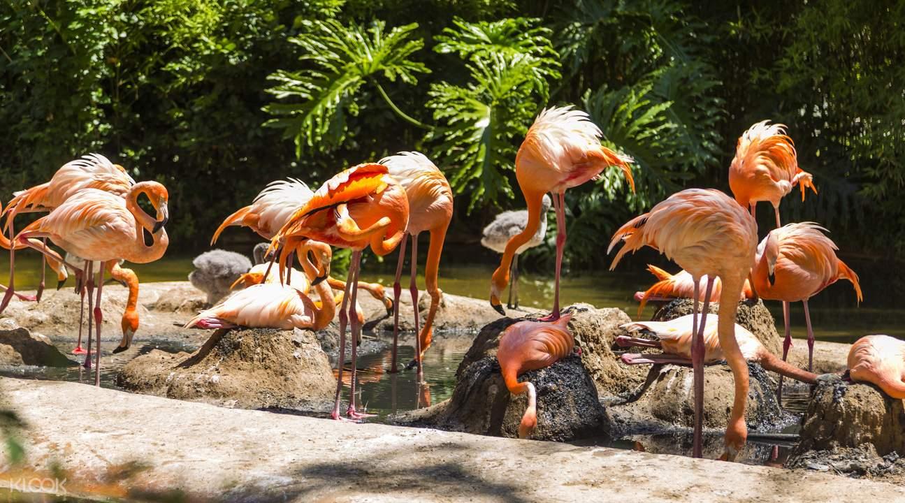 西班牙巴塞羅那動物園
