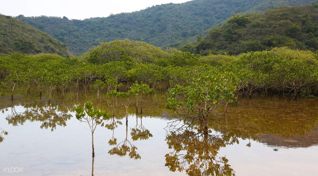 dammed lagoons lai chi wo hiking tour hong kong