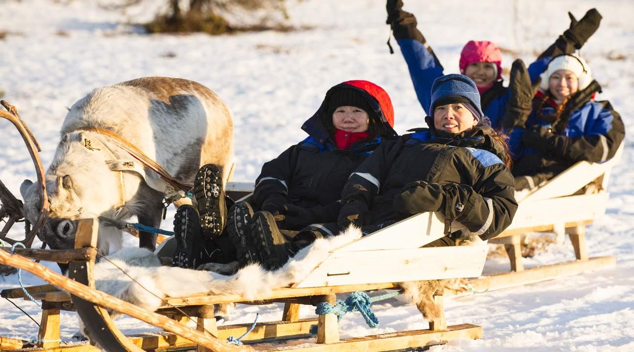 特罗姆瑟驯鹿雪橇