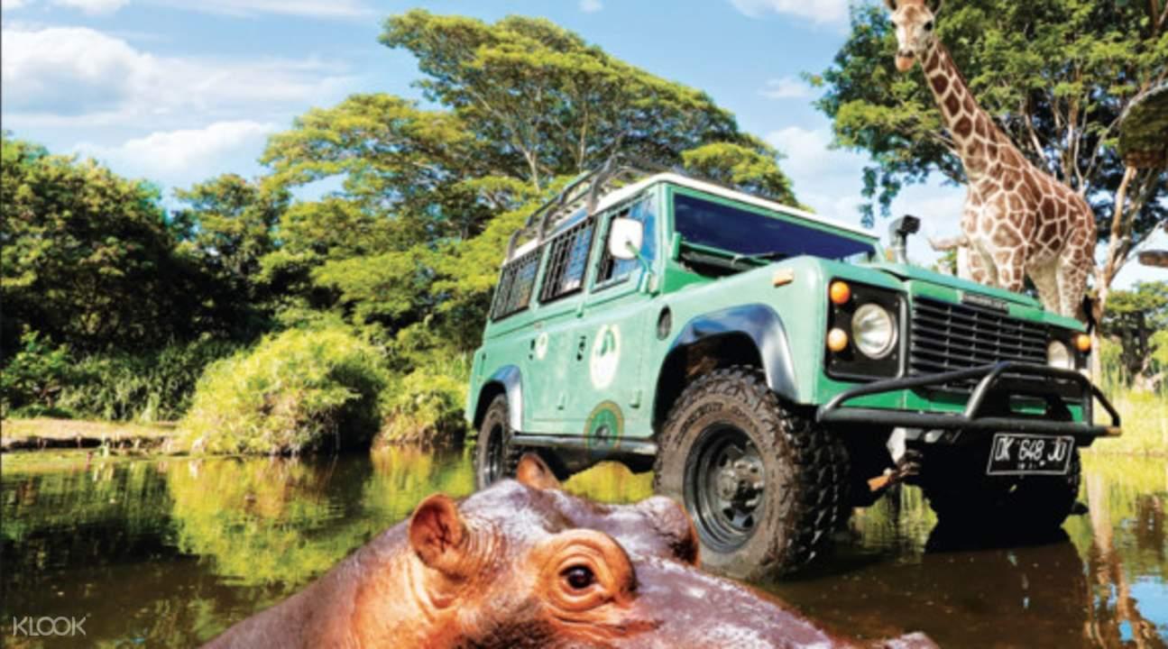 Book Bali Safari And Marine Park Tour