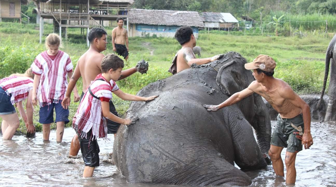 guests bathing elephants