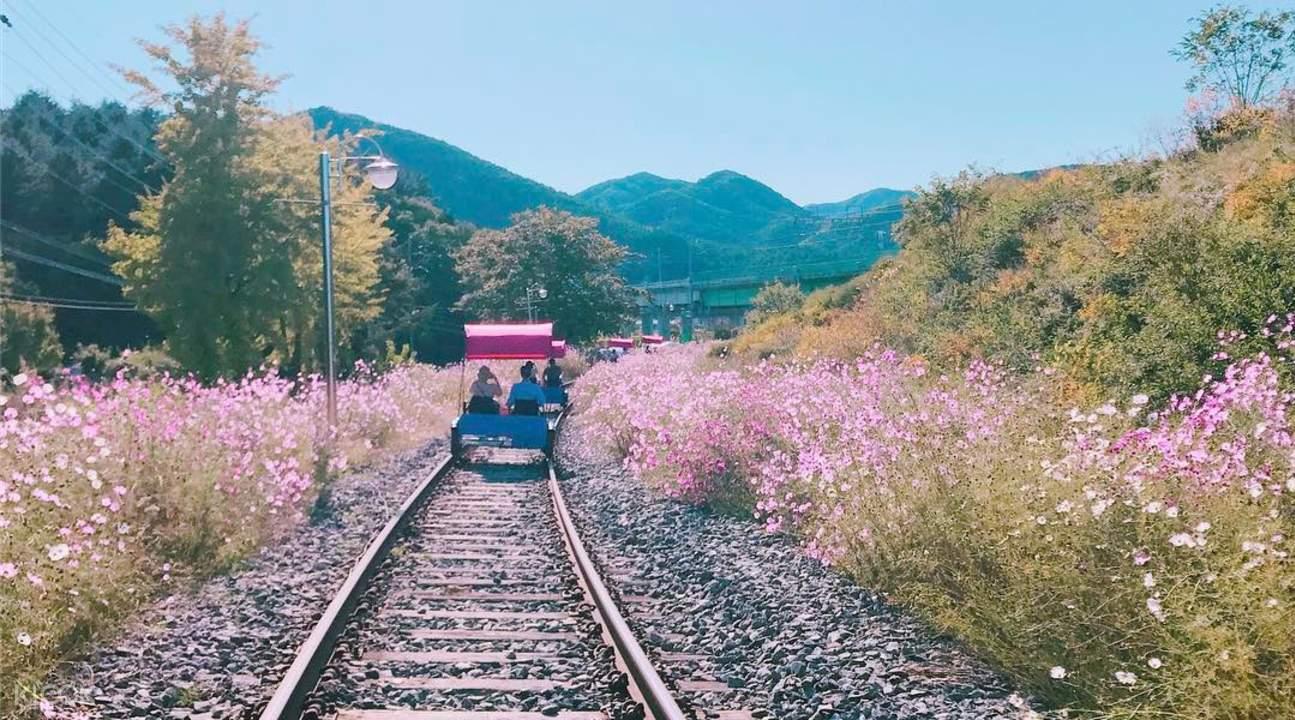 Cherry Blossom Rail Bike