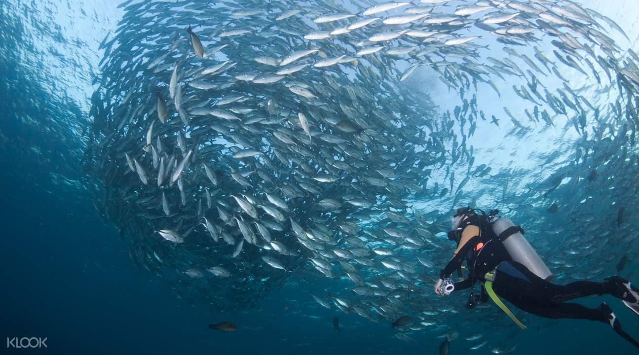 巴厘岛图兰奔一天潜水