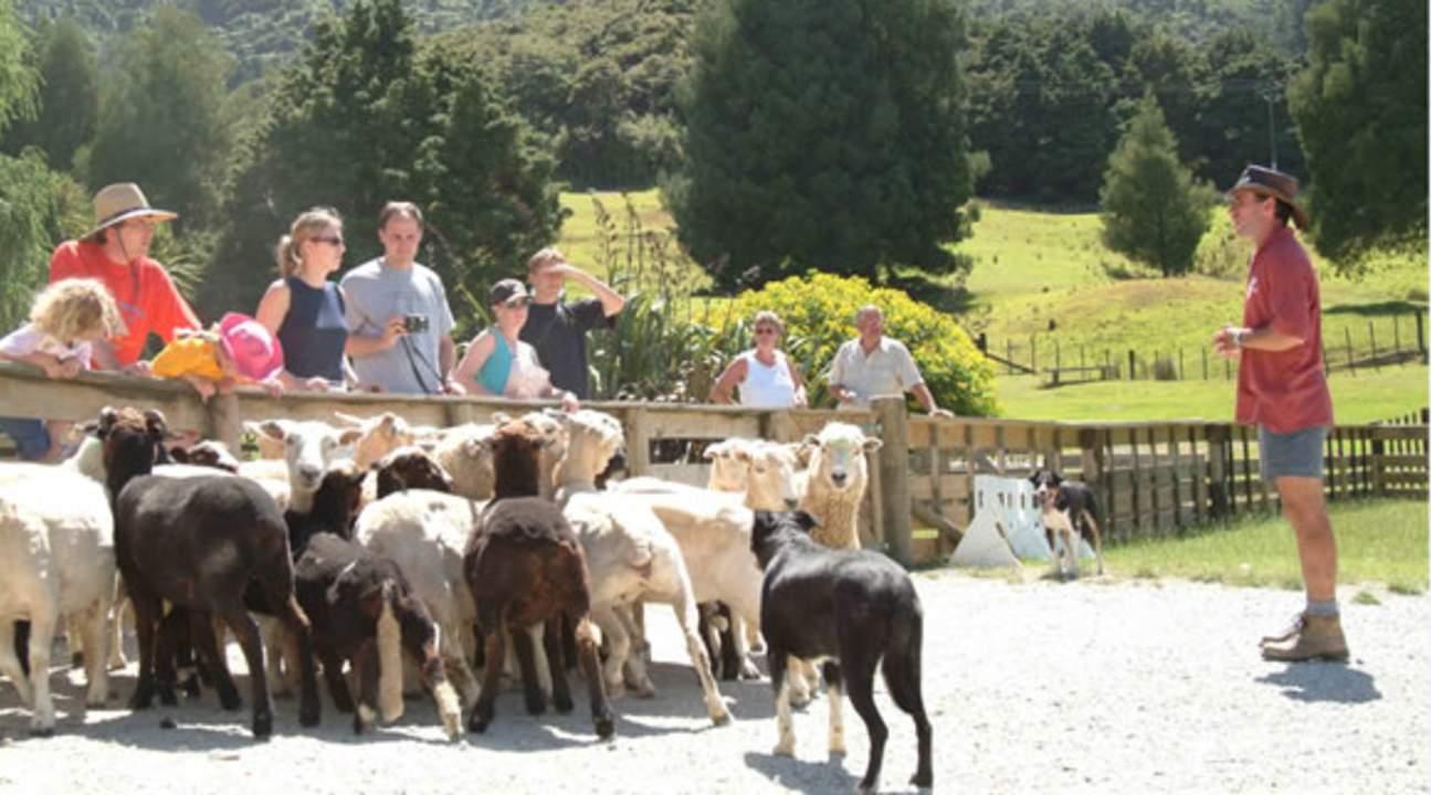 奥克兰绵羊世界