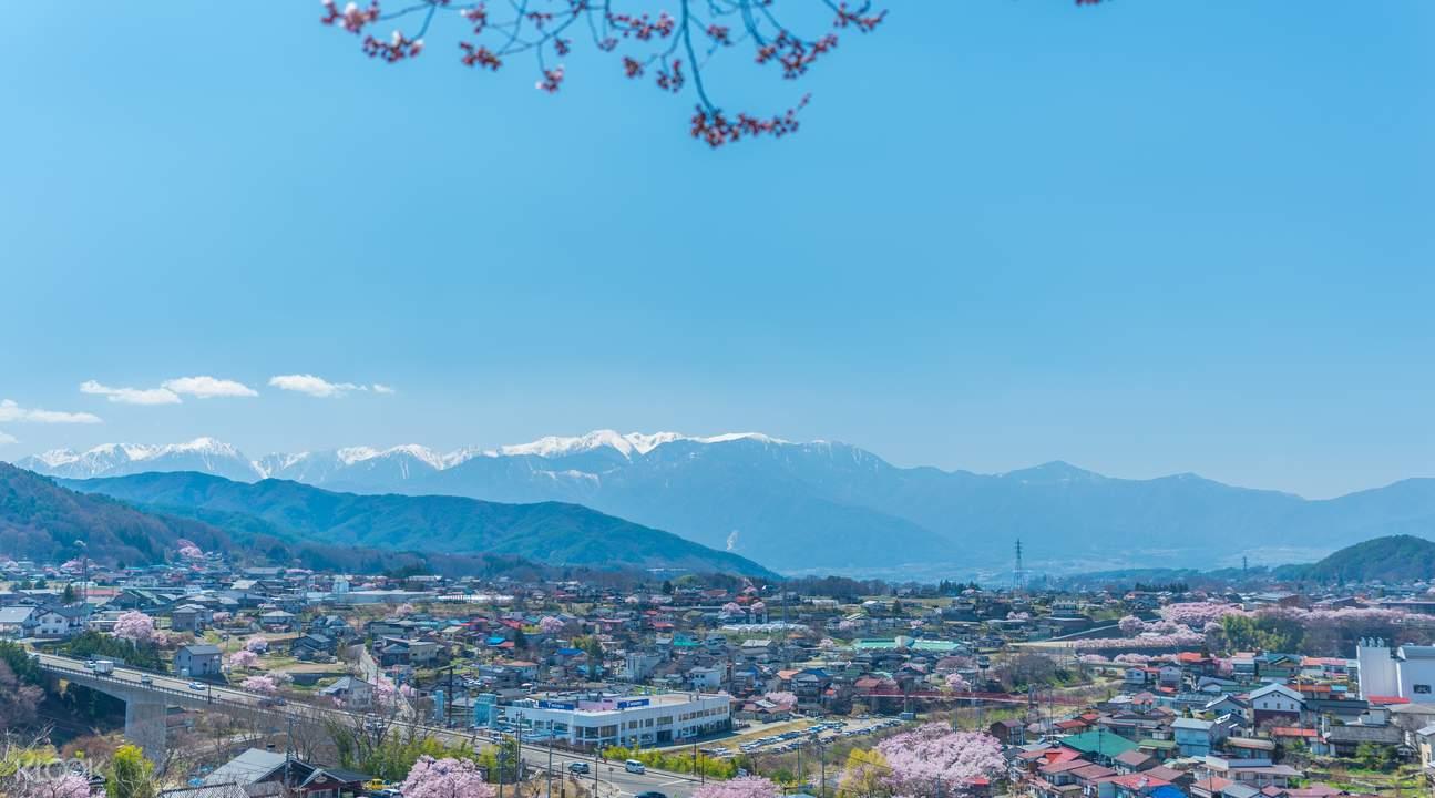 takato cherry blossoms