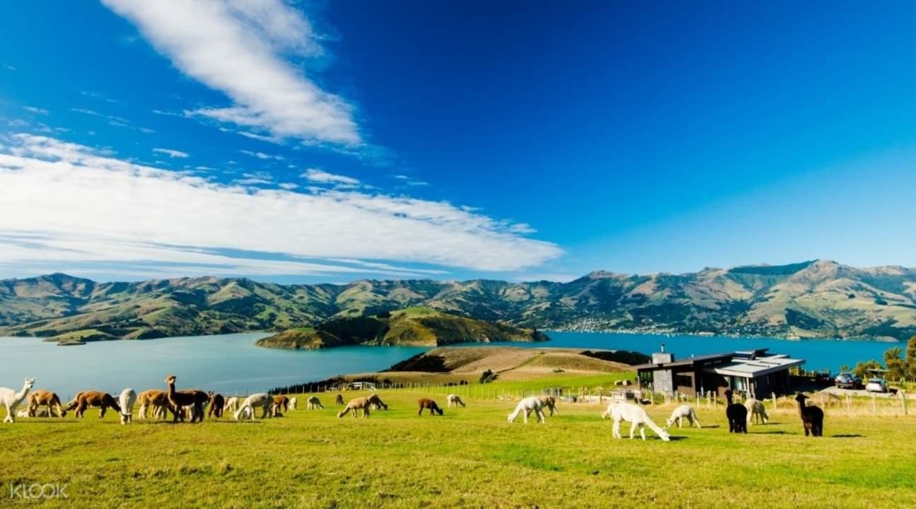 莎瑪拉羊駝牧場