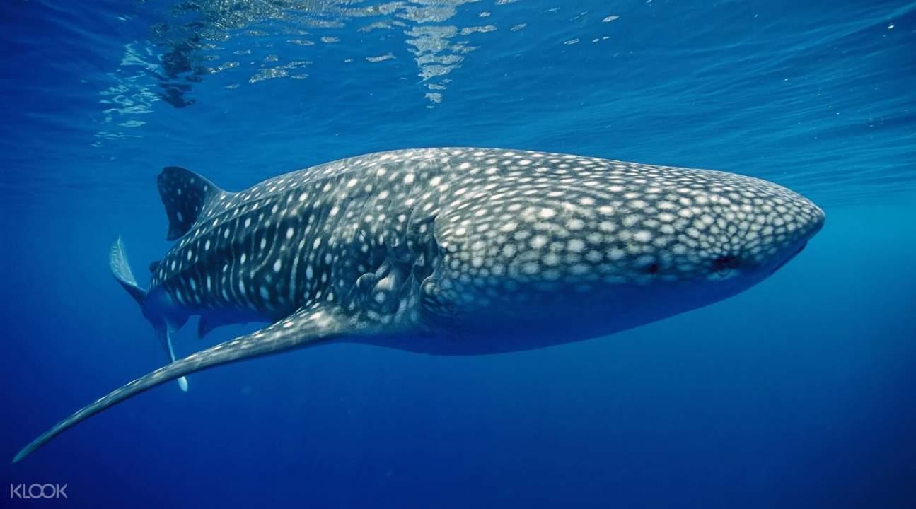 斯米蘭群島浮潛,similan群島潛水,泰國斯米蘭群島