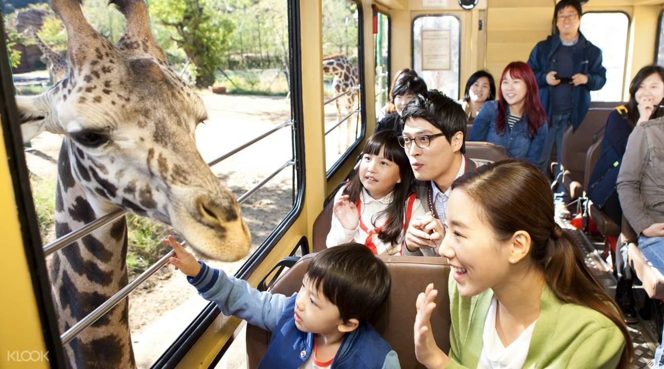 people on a tram with giraffe outside window