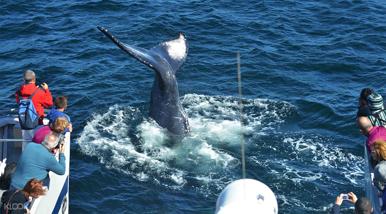 波士頓觀鯨巡航之旅