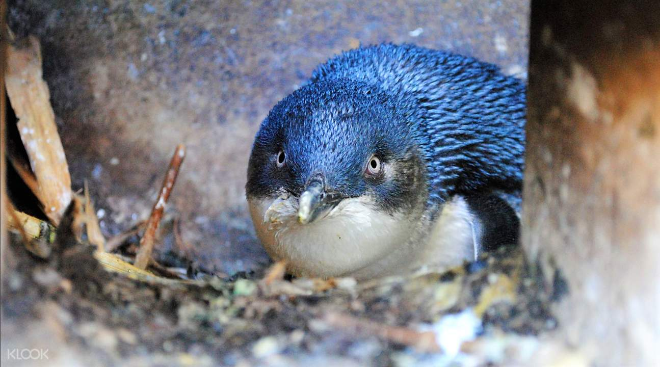 藍企鵝棲息地