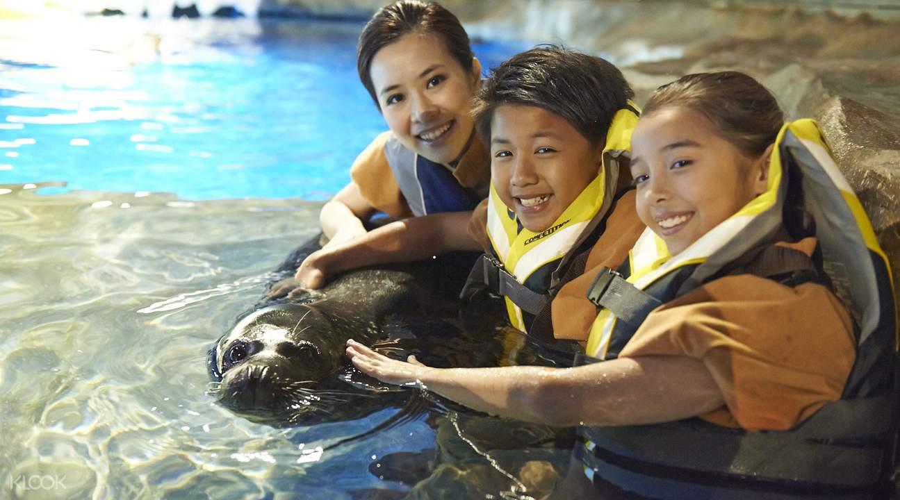 香港海洋公园海豹