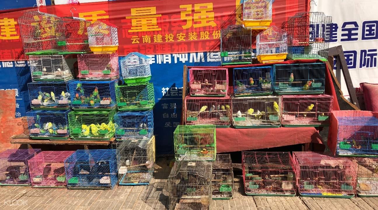 私人小团 昆明市区一日休闲游,云南花鸟市场