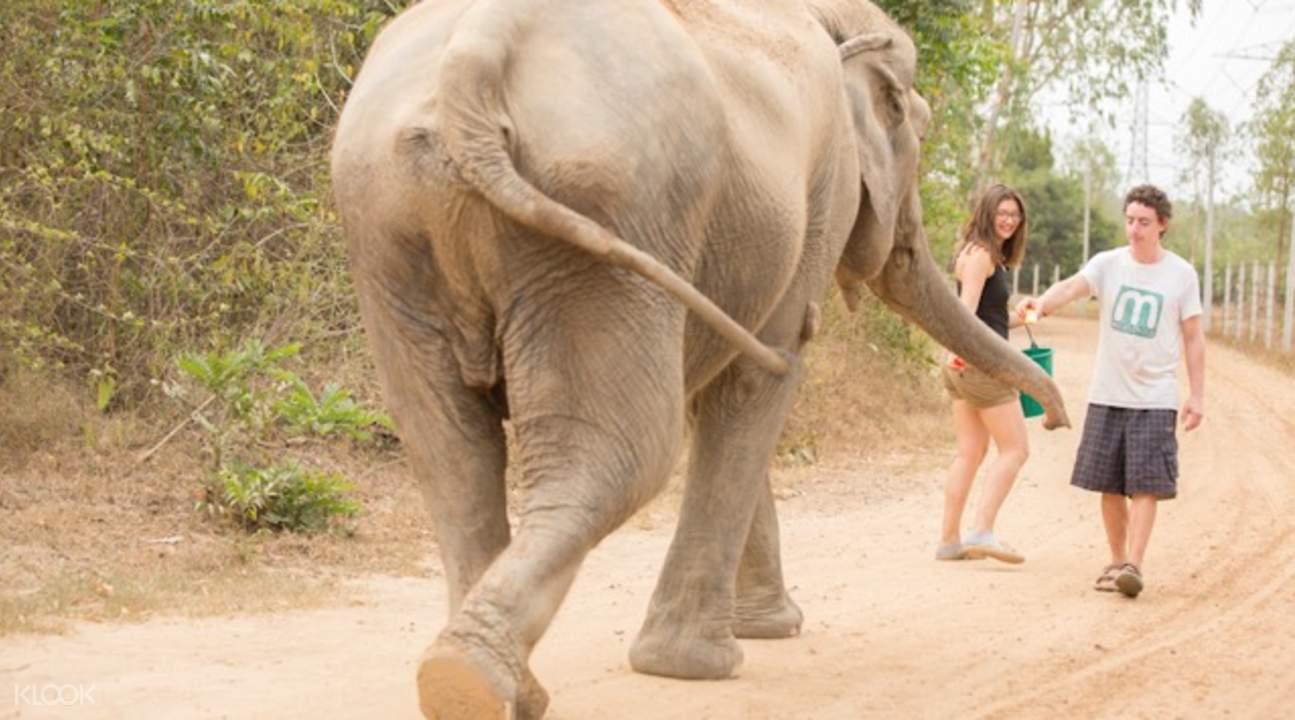 thailand elephant tour