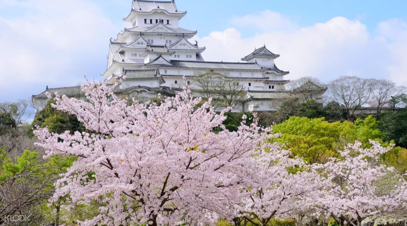 小田原城赏樱