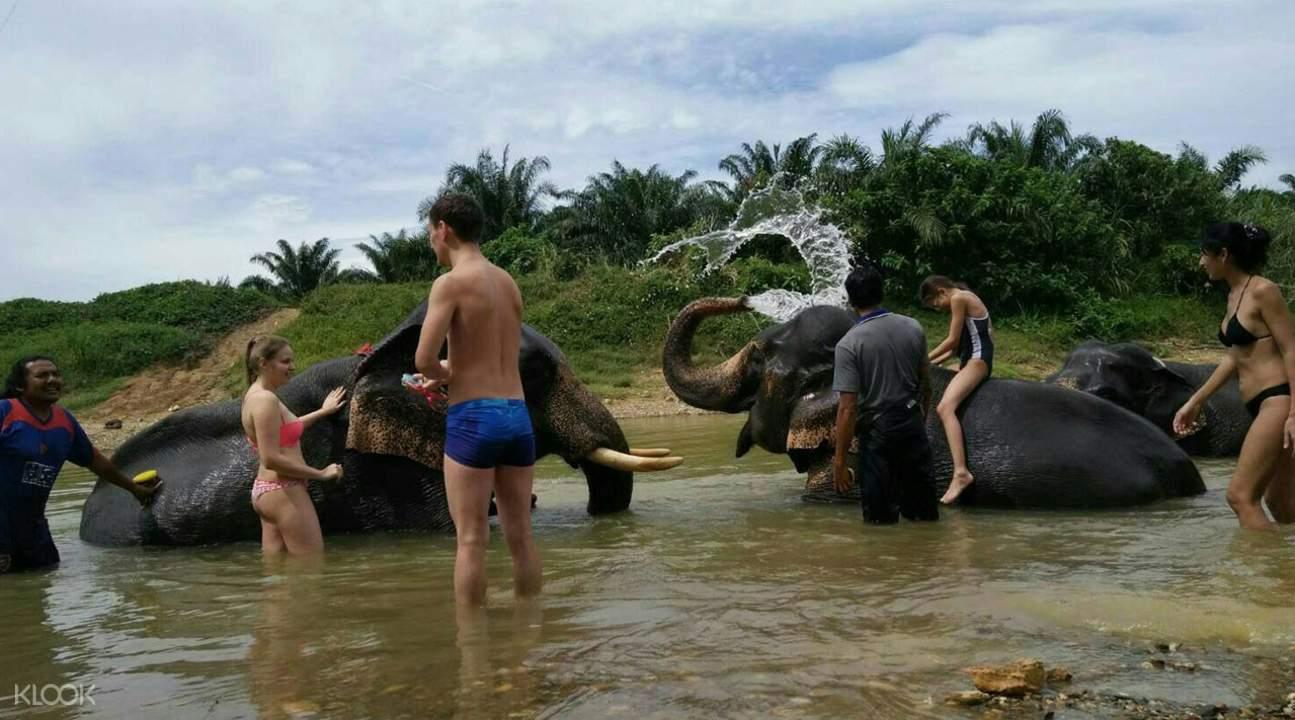 大象沐浴活動
