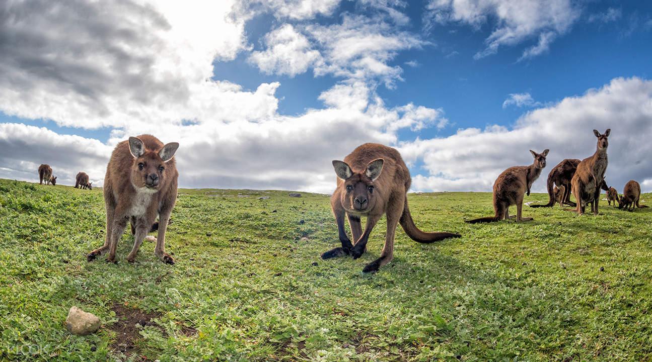 kangaroo island overnight