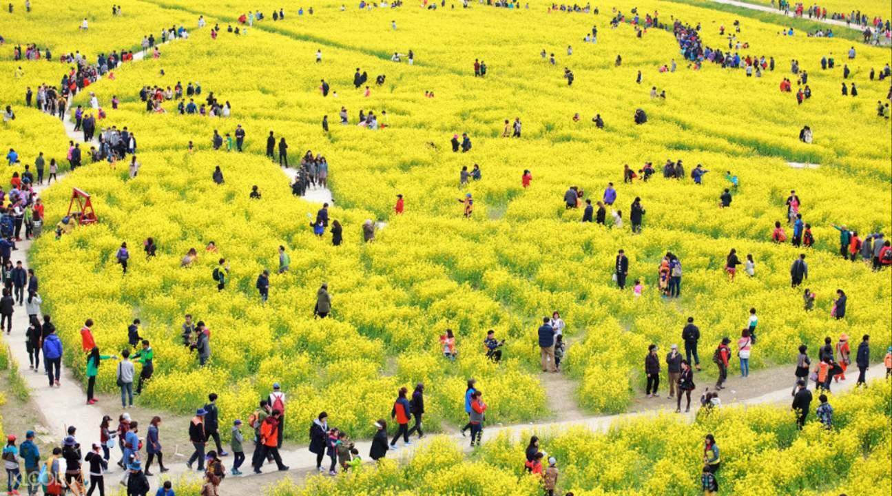 大渚生态公园