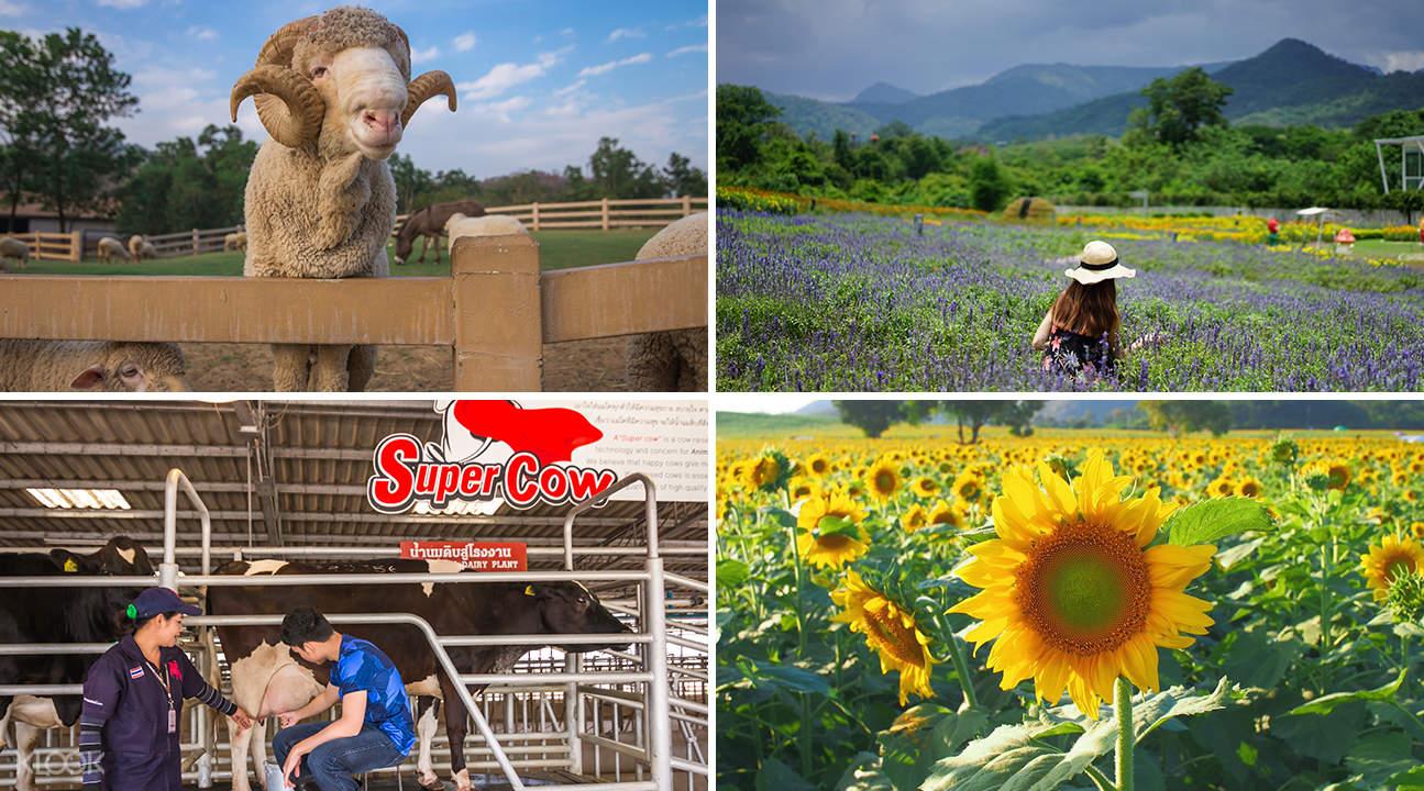 khao yai tour bangkok