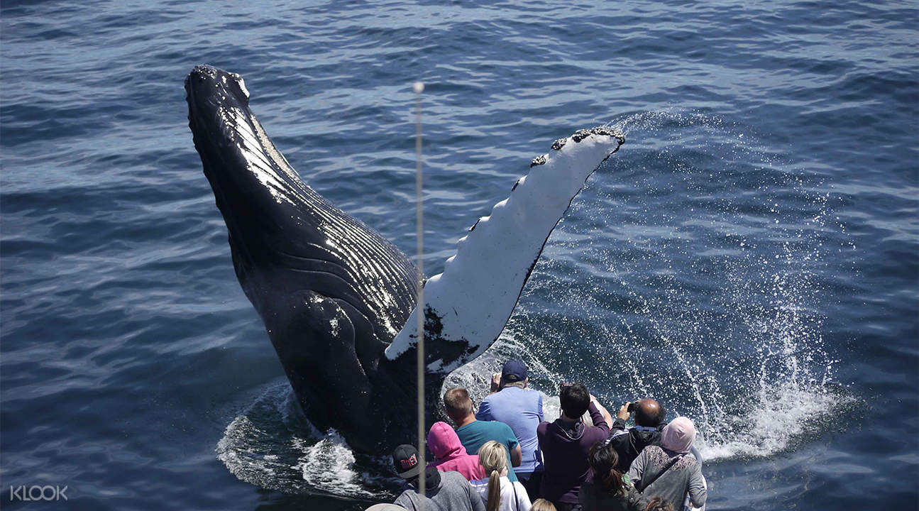 boston whale watching cruise