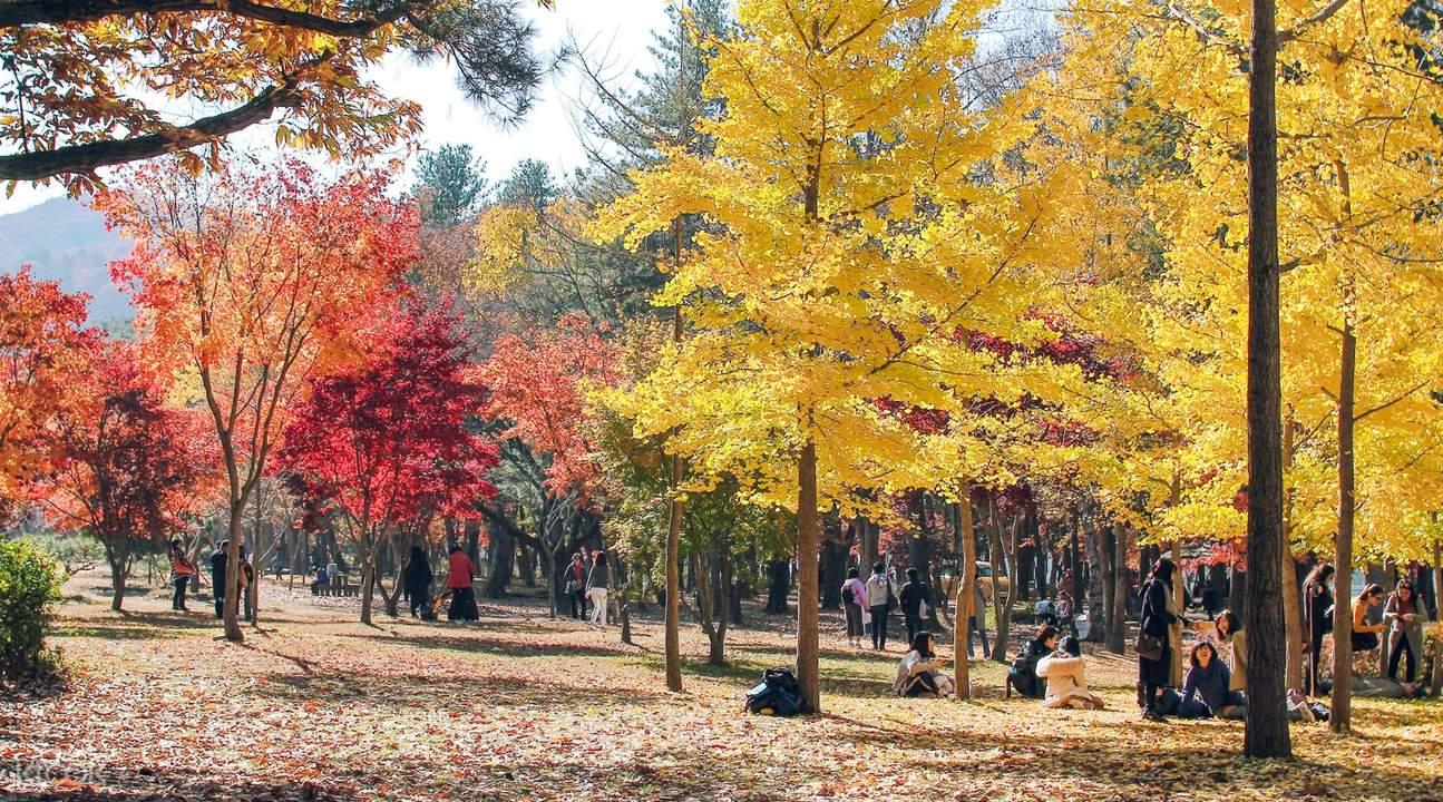 autumn trees in nami island