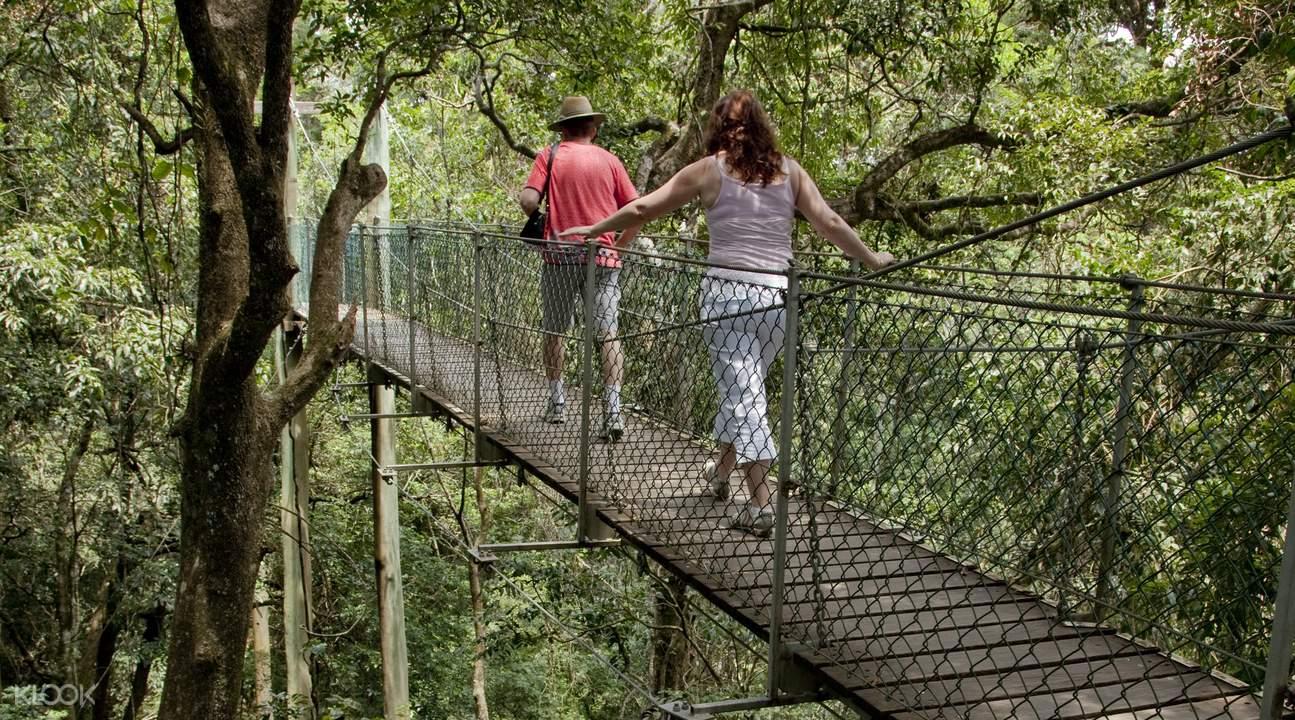 黃金海岸雷明頓國家公園奧萊利斯雨林一日遊