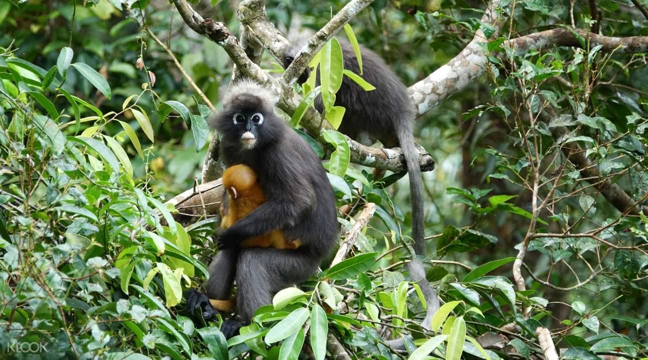monkey in penang rainforest