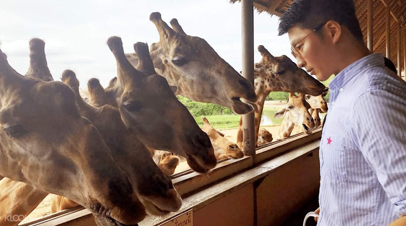 曼谷赛佛瑞野生动物园