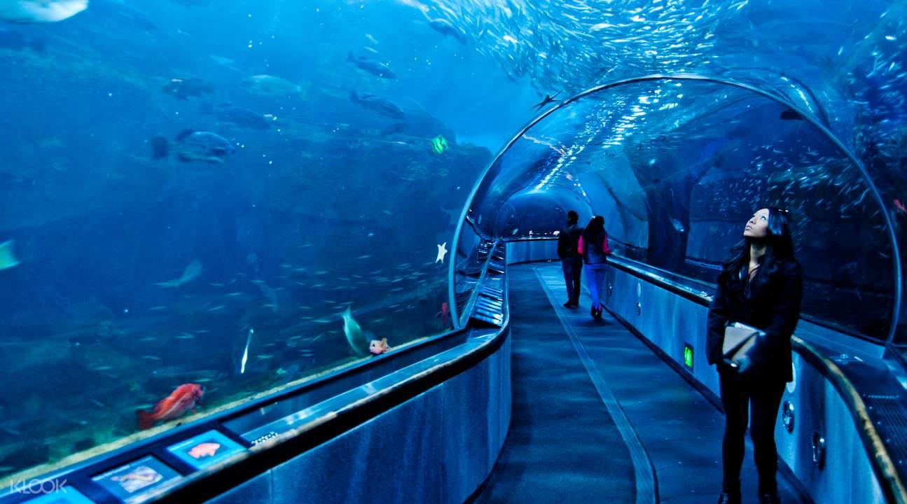 舊金山 海灣水族館一日門票