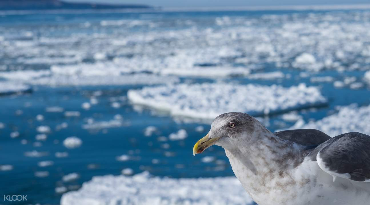 drift ice sightseeing abashiri hokkaido japan