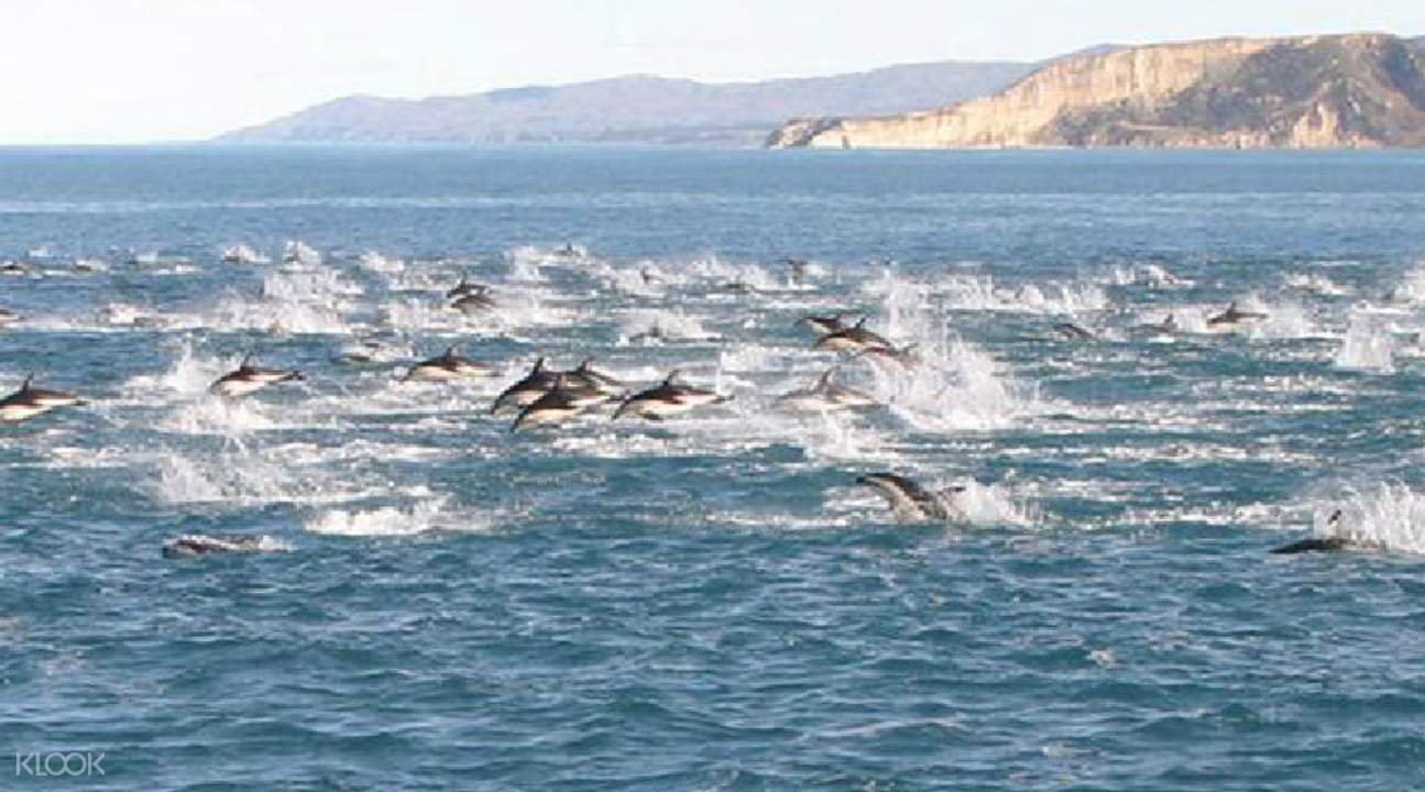 Dolphin Encounter New Zealand